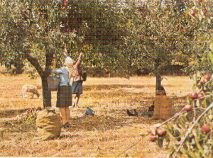 backroot1